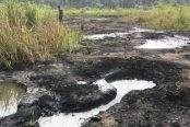 An-oil-spill-impacted-site-in-Ogoniland-174x116.jpg
