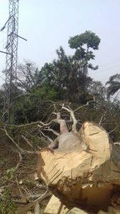 Wood loggers damage Oji River Nsukka Transmission line