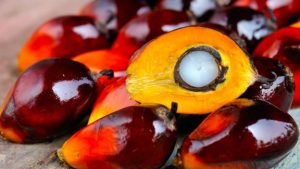 The EU's palm oil policy triggers condemnation