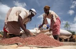 Women bagging grains