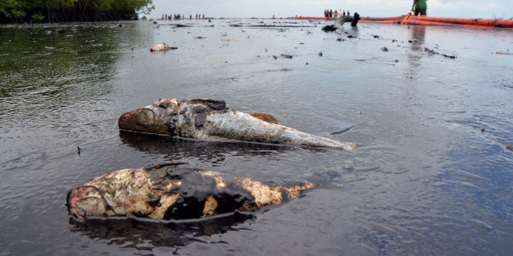 Reactions trail NOSDRA's report on dead fishes in N/Delta